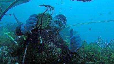 南澳生態野生鮑符合海洋平衡之道