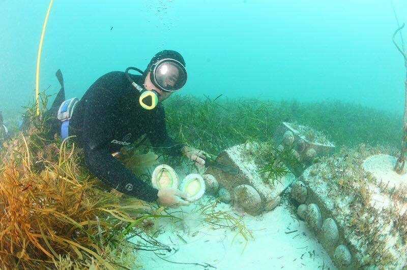 野生鮑魚大小約在3-5頭鮑尺碼