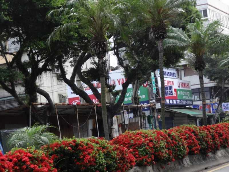 喬木+灌木的複層栽植可在有限的市區土地中將植物的數量極大化(台北市工務局提供)