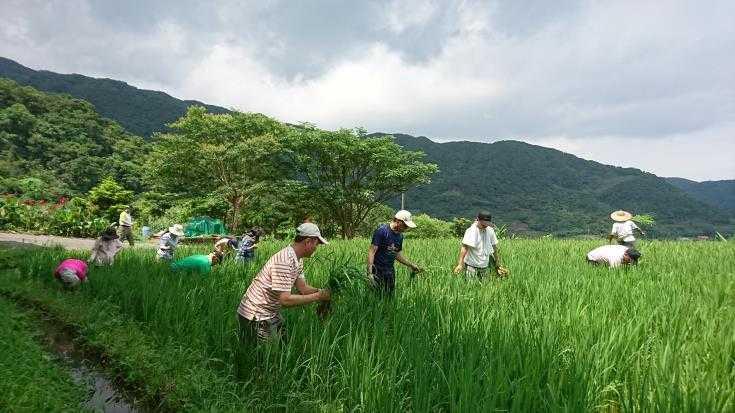 嵩山社區除草體驗(北觀處提供)