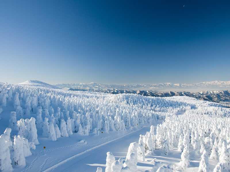 日本東北人氣夯,秋冬是旅遊重點季節(易遊網提供)