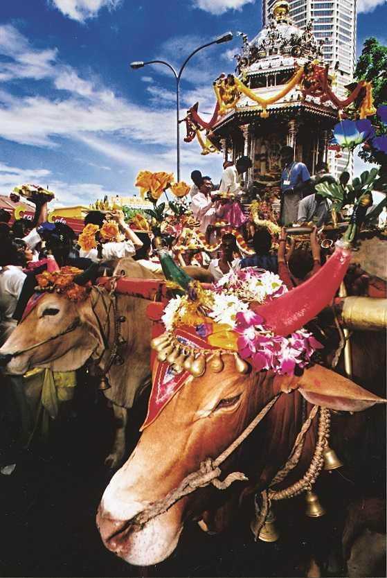 由兩頭牛拉著的銀色四輪馬車,其神龕由精緻的供品裝飾著,並佩戴金飾及七彩的花朵。