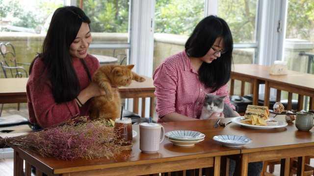 ▲東森山林渡假酒店推出毛家庭住房專案,還結合寵物餐廳及寵物美容。(圖/東森山林渡假酒店)