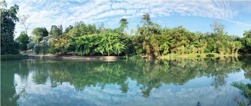 ▲從空中走廊俯看湖水,別有一番趣味。(圖片來源:新加坡旅遊局)