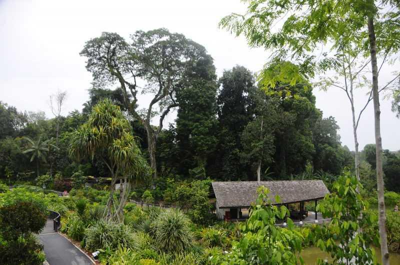 ▲熱帶植物園全世界只有兩座城市擁有,其中一座就在新加坡。(特派記者杜明賢攝)