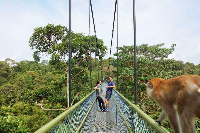 ▲麥里芝蓄水池公園裡的樹梢吊橋。(圖片來源:新加坡旅遊局)