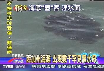 南加州海灘 出現數千罕見黑水母