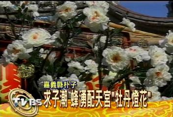 求子潮 蜂湧配天宮「牡丹燈花」