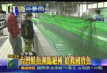 碧利斯襲台/〈獨家〉風災掃台灣鮭 獨家直擊復育中心