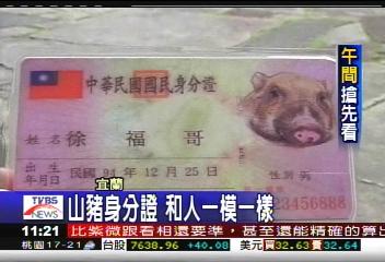 有身分的山豬 年底前換新身分證