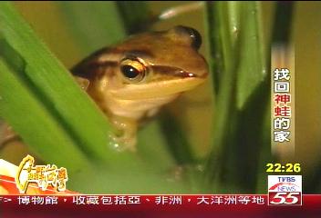【一步一腳印】找回神蛙的家 「田中博士」復育生態(上)