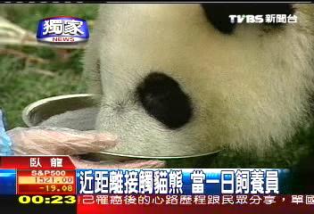 〈獨家〉近距離接觸貓熊 當一日飼養員