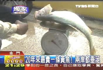 〈獨家〉黃魚奇貨可居 大陸一尾賣5萬