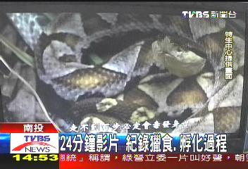 揚名國際!百步蛇影片 奪美3大獎