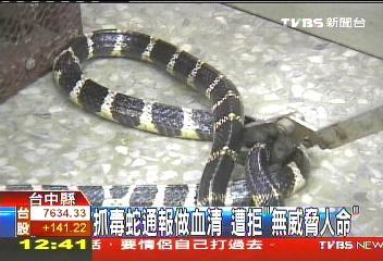 抓毒蛇通報做血清 遭拒「無威脅人命」