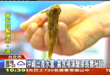 沖繩出產水雲 富含褐藻醣膠長壽秘訣