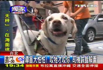 〈獨家〉導盲犬怕怕!咬牠才咬你 司機詼諧解圍