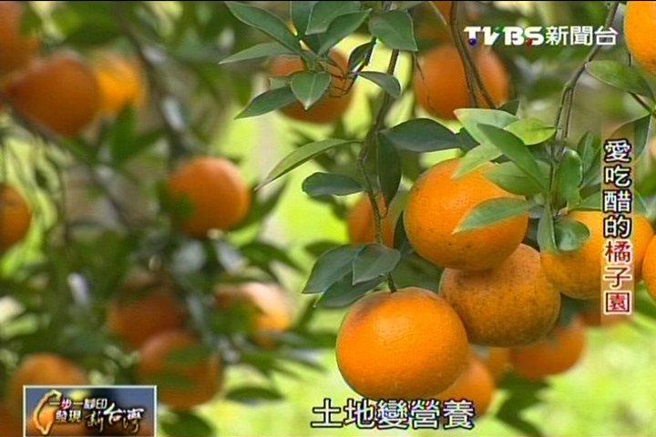 【一步一腳印】愛吃醋的橘子園