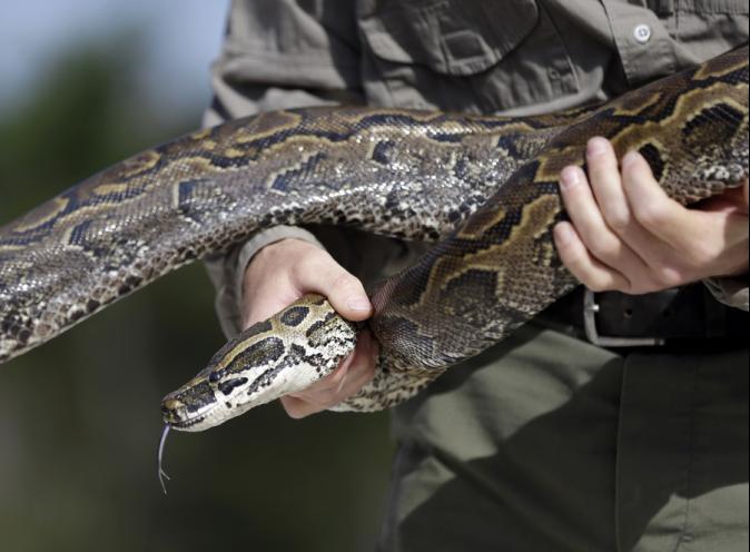 小心蛇出沒! 天暖蛇外出覓食嚇壞民眾