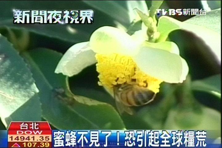 蜜蜂不見了! 恐引起全球糧荒