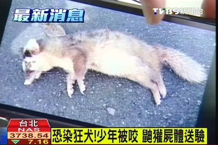 恐染狂犬!少年被咬 鼬獾屍體送驗