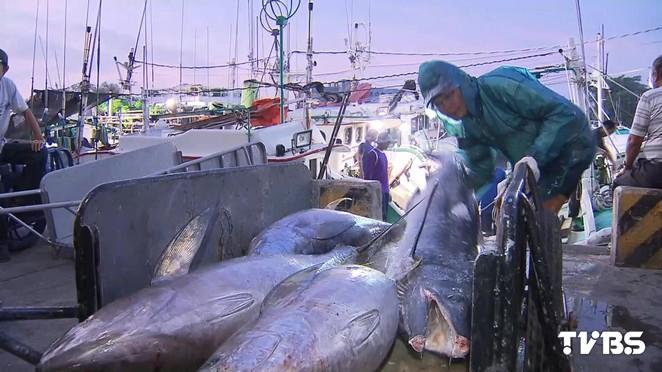 搶救海洋/科學家:2048年野生魚類消失 人類無魚可吃