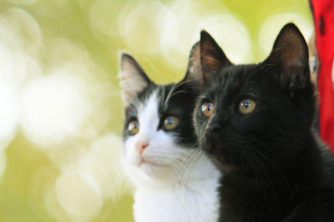 【嚴選NEW電影】遊走於現實與夢境 看療癒貓咪與暗黑格雷