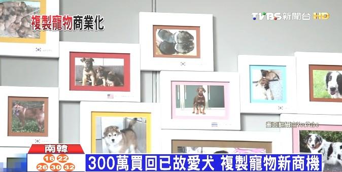 韓複製技術商業化 300萬幫你複製愛犬