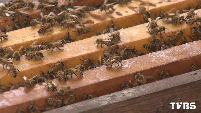 濫用農藥 蜂蜜、花粉、蜂王乳恐遭殃