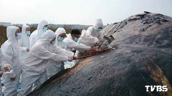 擱淺抹香鯨「胃塞滿垃圾」 人類成兇手之一