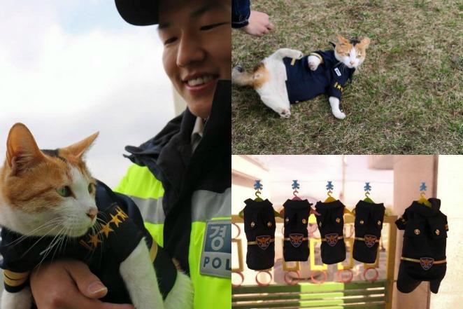 釜山「警貓」報恩!陪執勤還有制服穿