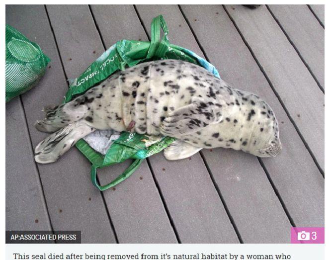 好心?女誤認小海豹遭遺棄 帶回家反害命