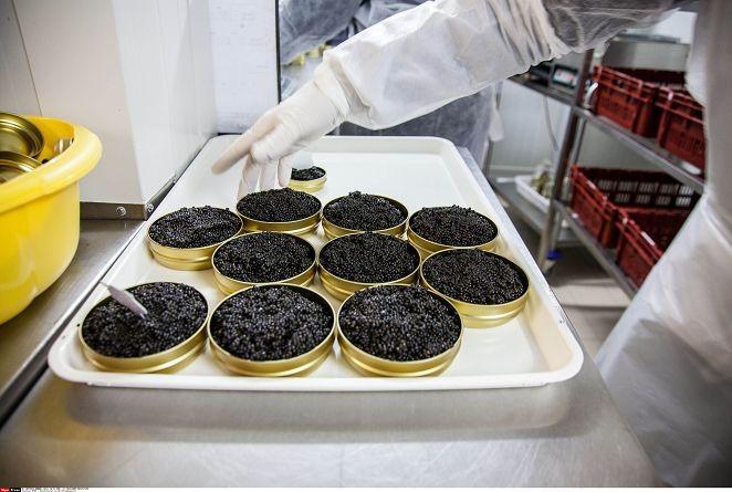 FOCUS/推開美食之窗 認識被西方鎖國的伊朗