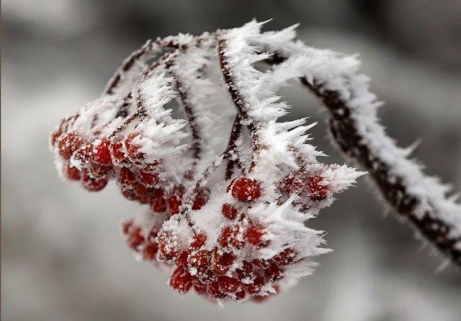 「北極震盪」冷空氣南洩 北半球急速冰封