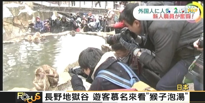 FOCUS/長野地獄谷 遊客慕名來看「猴子泡湯」