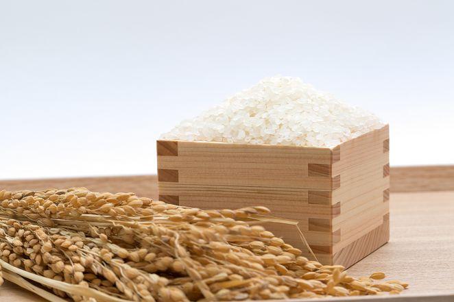 FOCUS/開發抗熱白米 熊本縣高成本換新種