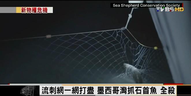 FOCUS/暖化!雪地現混種熊 瀕危海豚剩60頭